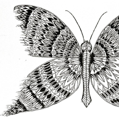 charlie-willis-butterfly