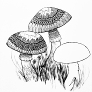 charlie-willis-gower-memorial-prize-drawings-10