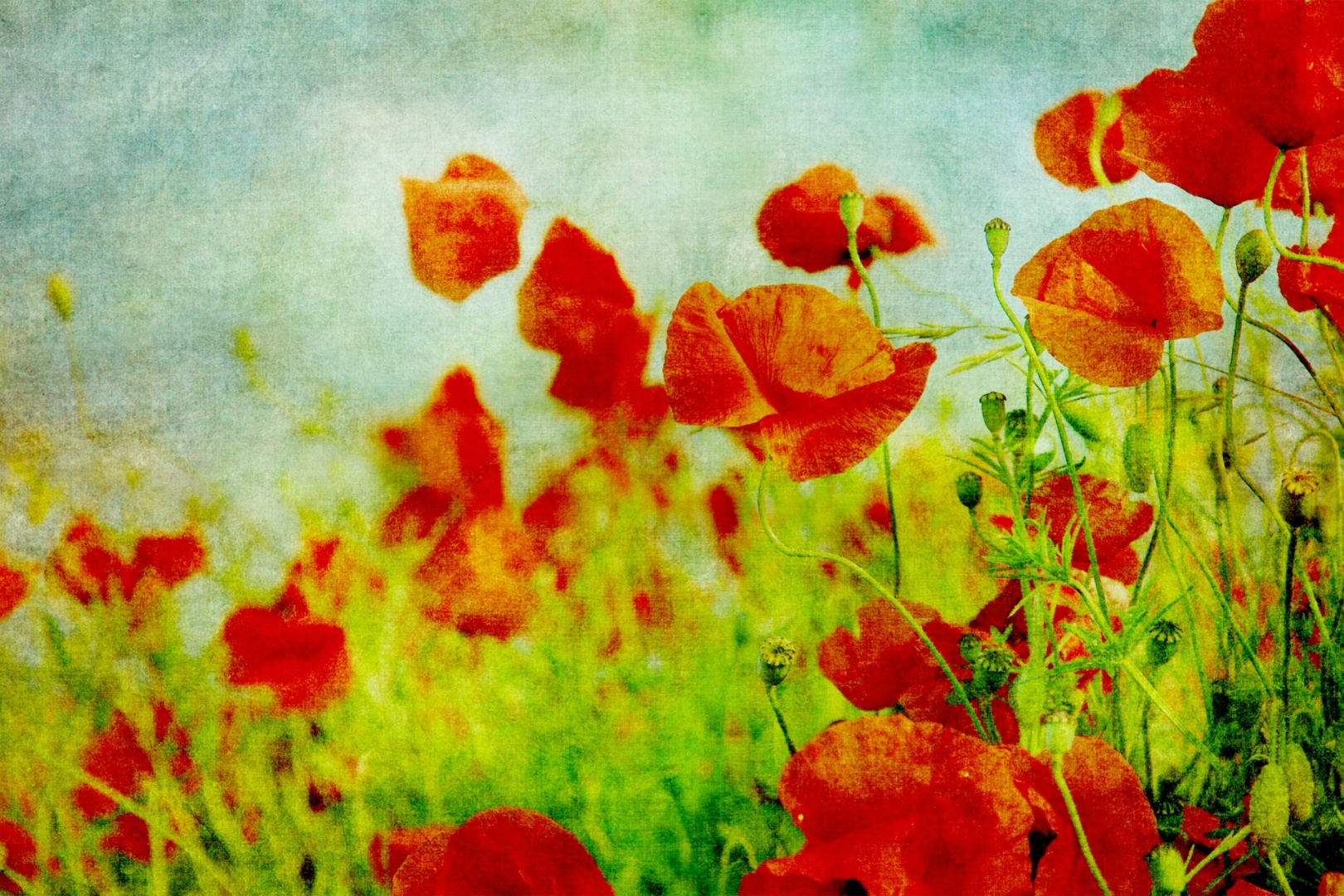 The Symbolism Of Poppies The Poor Print